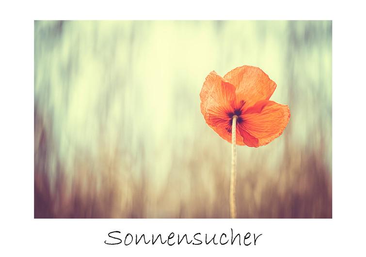 Sonnensucher_max.jpg