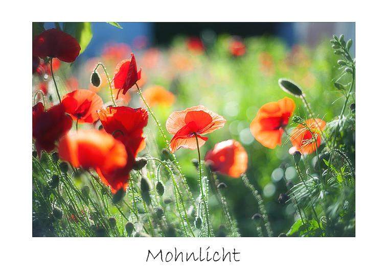 Mohnlicht_max.jpg