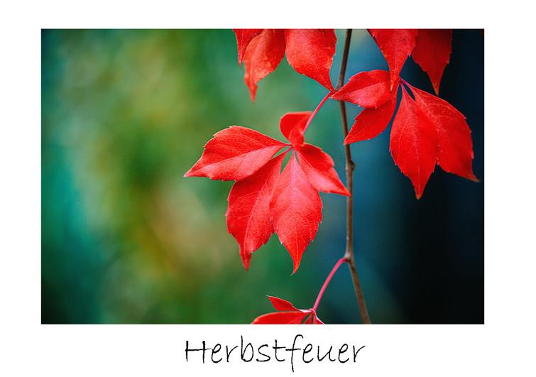 print_Herbstfeuer.jpg