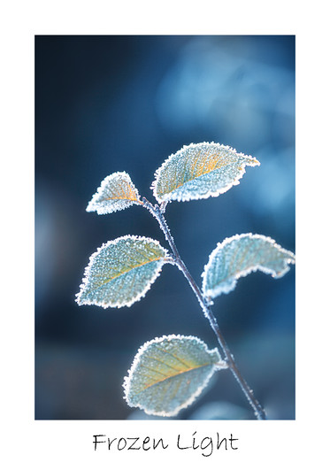 print_Frozen-Light.jpg