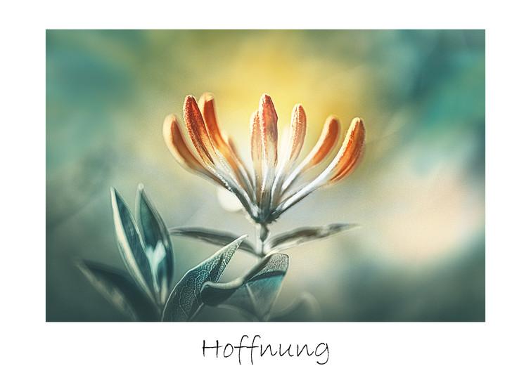 Hoffnung_max.jpg