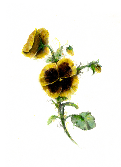 Yellow Pansy.png