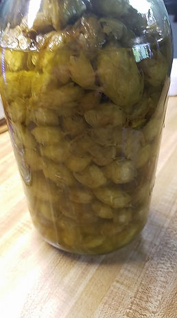 hops5 infused in oil.jpg