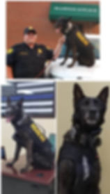 Zorro k9 collage for website vertical 7-