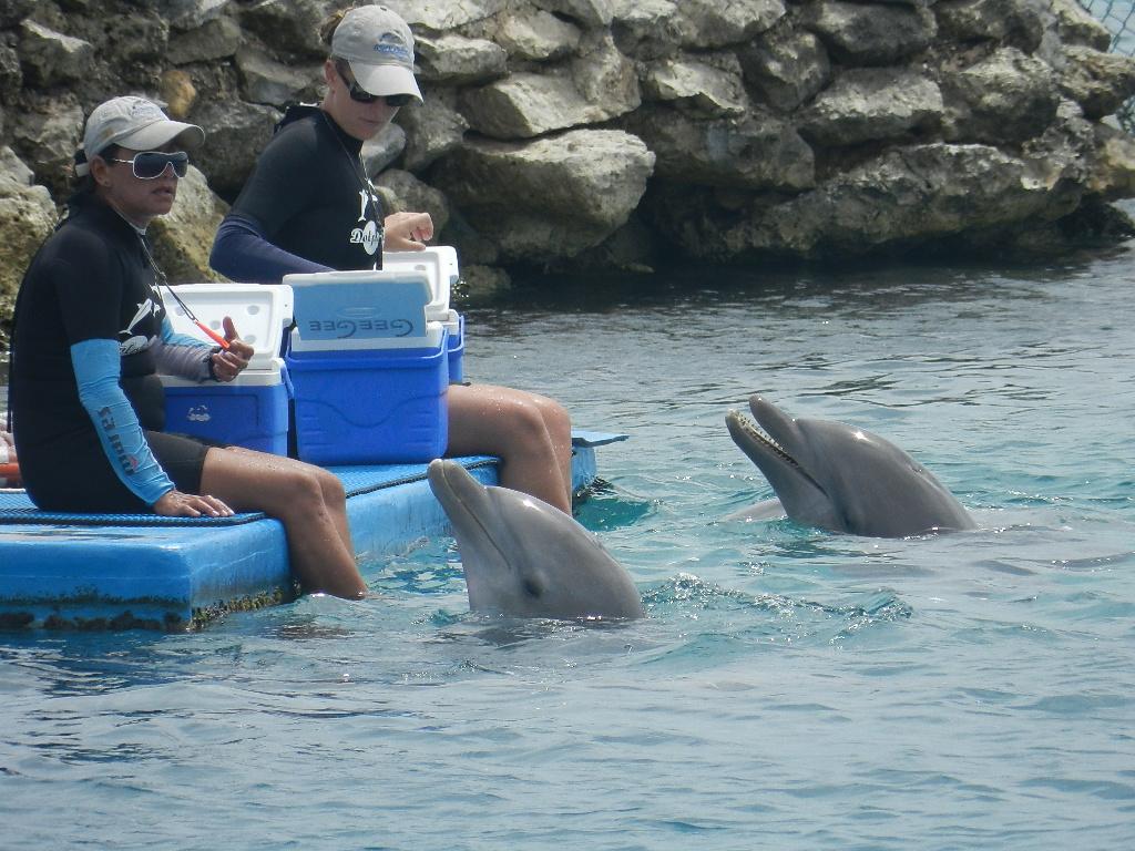 Dolphin show Curacao Seaquarium