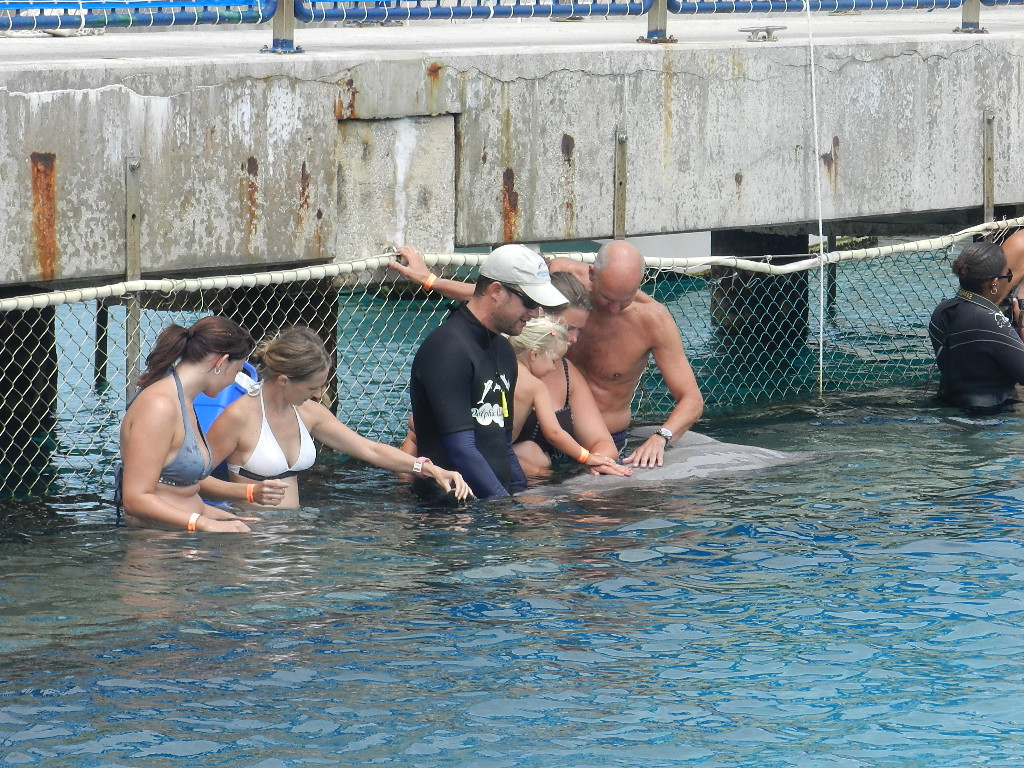My American guests Dolphin encounter