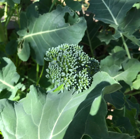 vegie gardens, earth, sky and us!