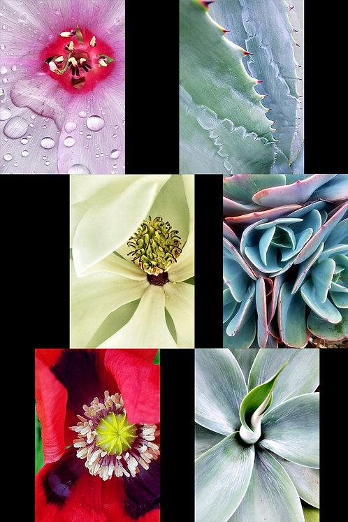 Set of 6 cards, Flora, blank