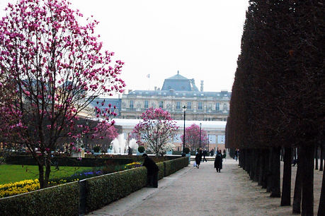 Springtime in Paris, Palais Royale blooms in the park, image by Holman Photography