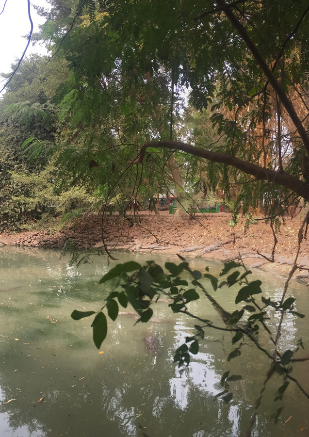 City tour- Crocodile pool