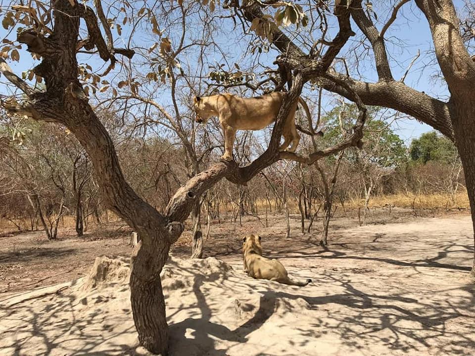 Fathala safari