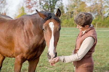 Lady feeding Horse.jpg
