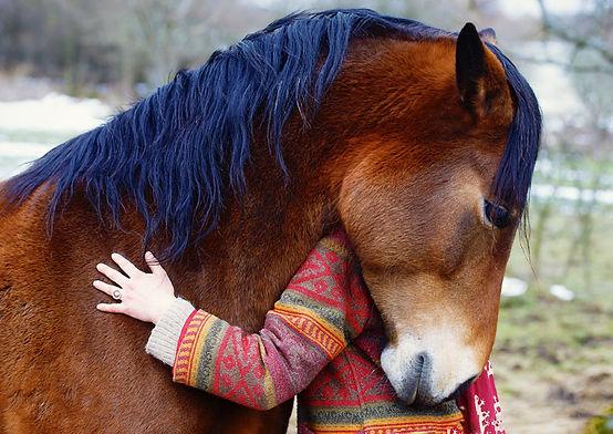 Horse Friend.jpg