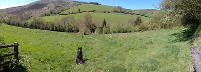 flossy surveying the exmoor hills.jpg