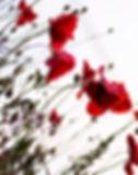 selbstbewusstsein stärken kurse nrw  selbstbewusstsein stärken kurse unna  selbstbewusstsein aufbauen seminar  kurse selbstbewusstsein stärken bei kindern  selbstbewusstsein stärken selbstbewusstseinstraining  seminar selbstbewusstsein Unna Petra Kuth selbstbewusstsein stärken kurse unna