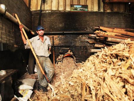 Producing Panela the artisan way!
