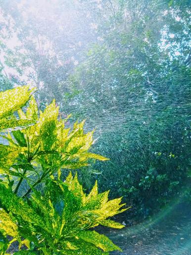 """sprinkler dance"", airlie gardens"
