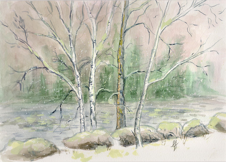 birch on the river