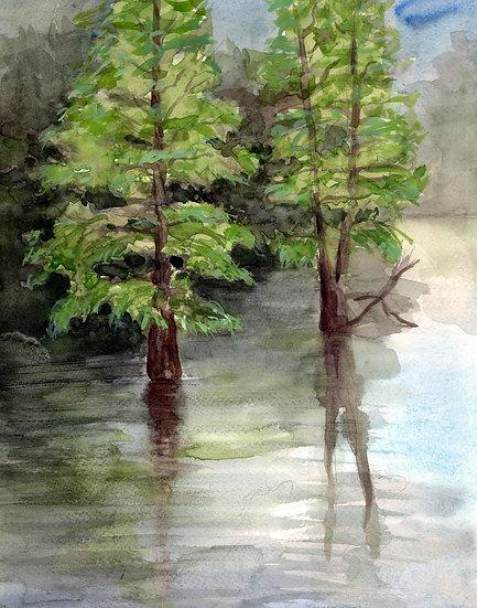 lake cypress