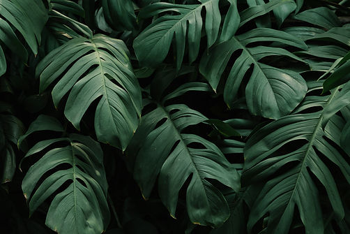 tropical-green-leaves-background.jpg