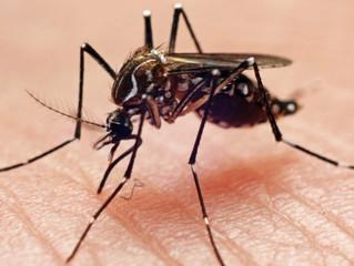 Às vésperas do verão, aumento de chikungunya e mortes preocupa...