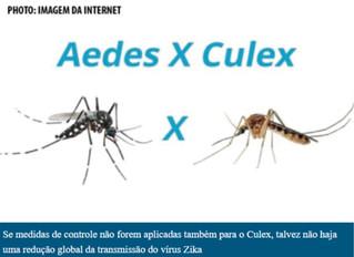 Cientistas brasileiros descobrem que pernilongo transmite vírus Zika