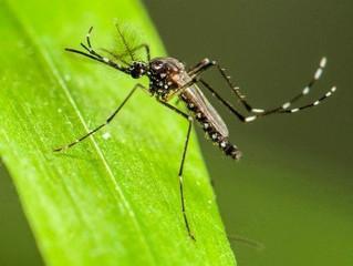 Como nós evoluímos para lutar contra as doenças que nos contaminam