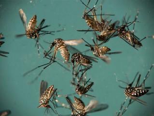 Pelo menos 1.496 cidades estão em alerta ou risco para doenças do 'Aedes'