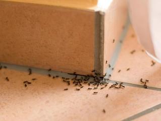 Muitos insetos? Entenda por que eles proliferam mais nesta época do ano