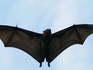 Flórida confirma morte por raiva de pessoa mordida por morcego