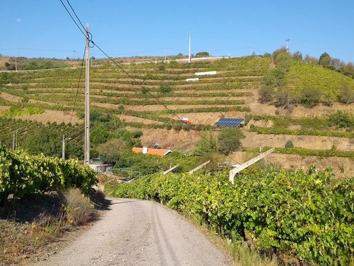 Caminho de acesso à vinícola Dona Berta