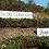 Thumbnail: TINTO CÃO RESERVA 2012    Garrafa 750 ML