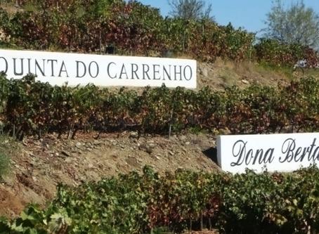 Conheça a Quinta do Carrenho, onde se localiza a Vinícola Dona Berta, Parceira da Chico Carreiro.