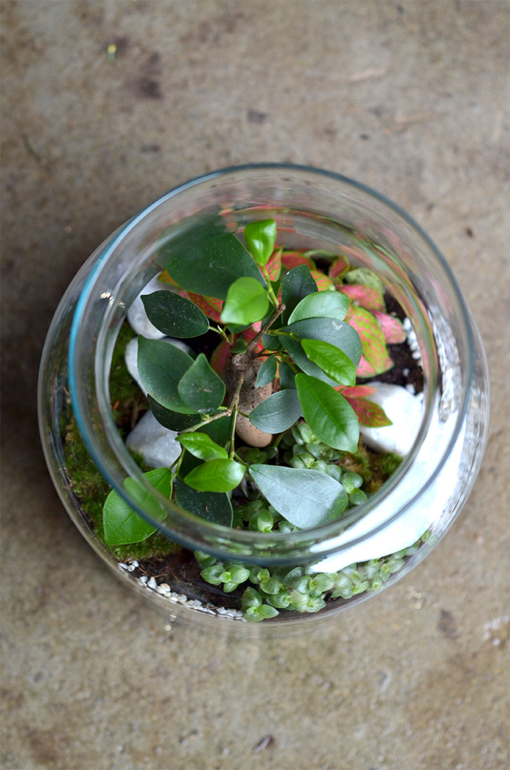 Ecosysteme terrarium facile