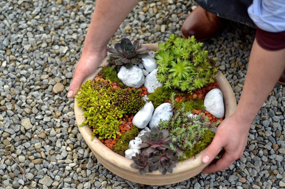 Composition de plantes grasses extérieures