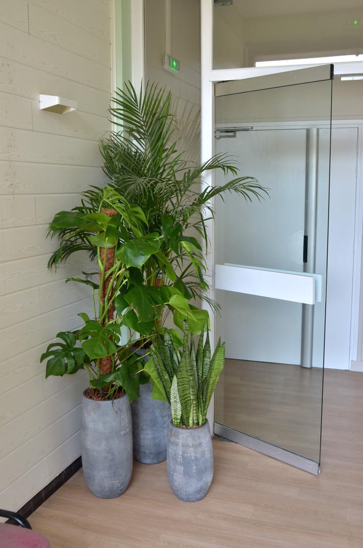 Plantes bureau espace accueil