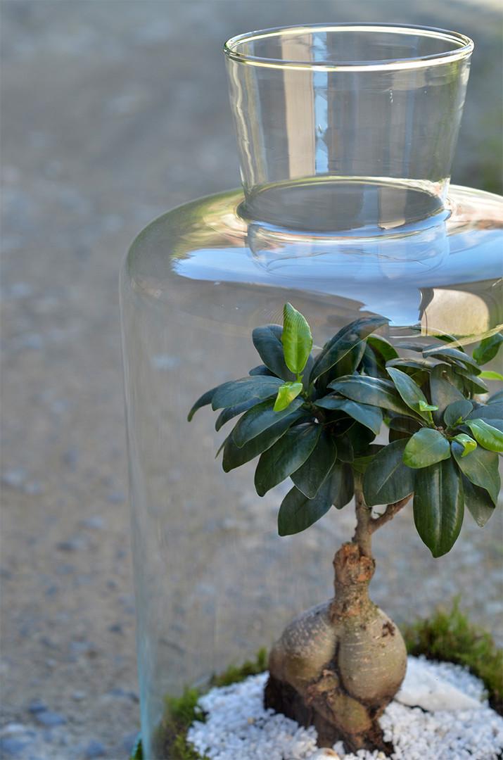 Terrarium plantes vertes