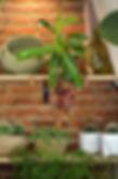 plantes vertes et fleuries originales et faciles