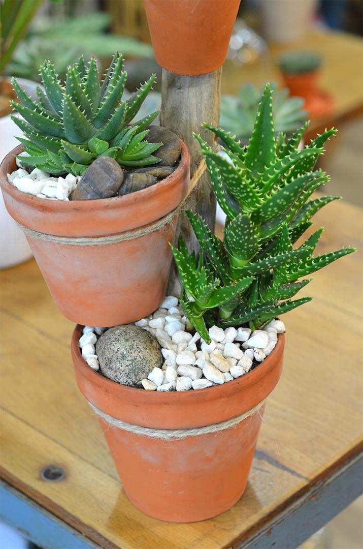 Aloe plante grasse pot terre cuite