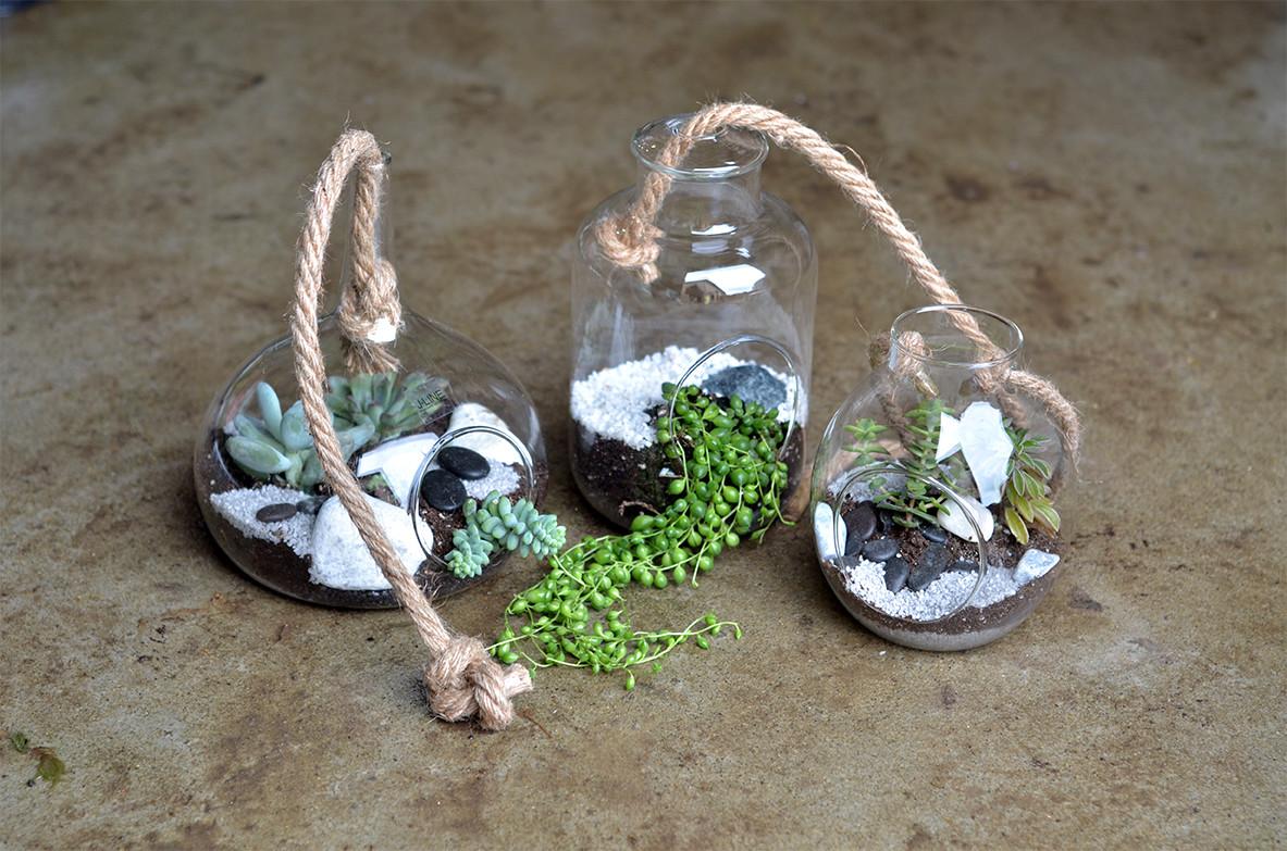 Terrarium plantes grasses suspension
