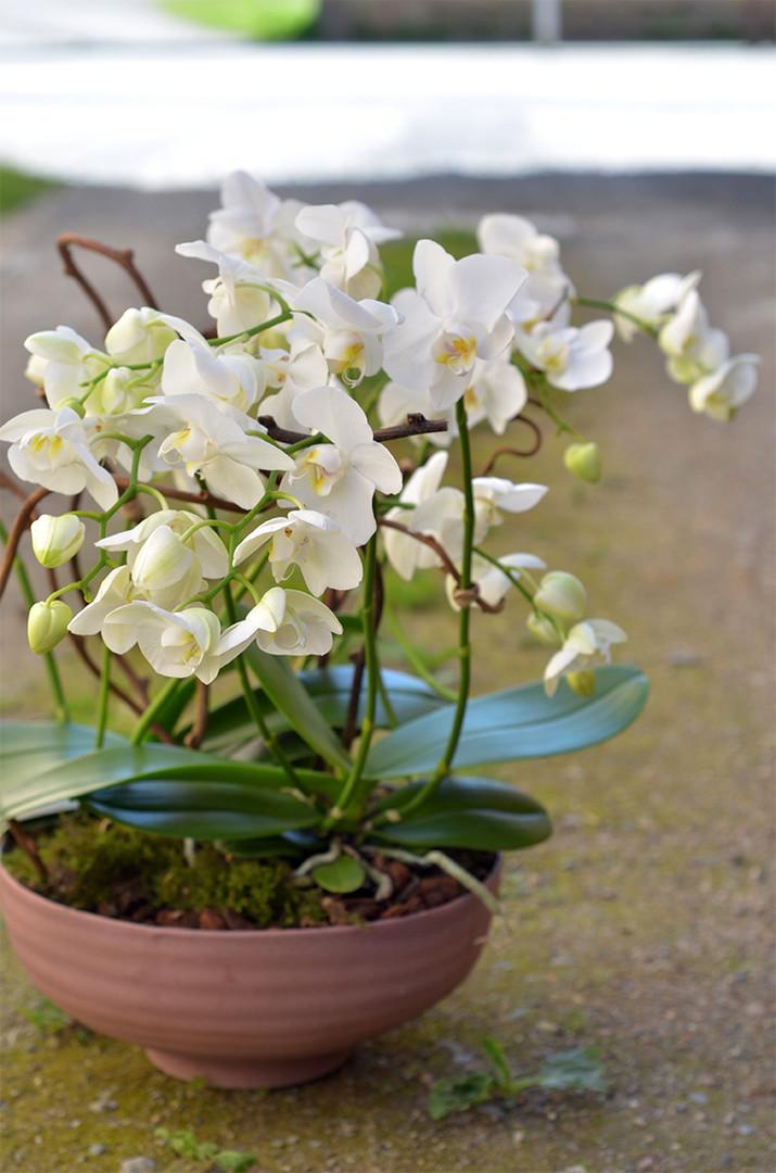 Orchidee originale blanche