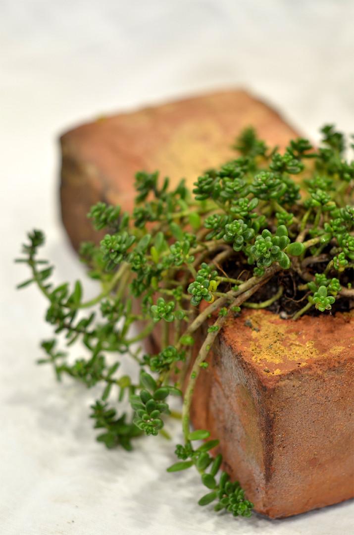 Cadeau végétal original brique terre cuite