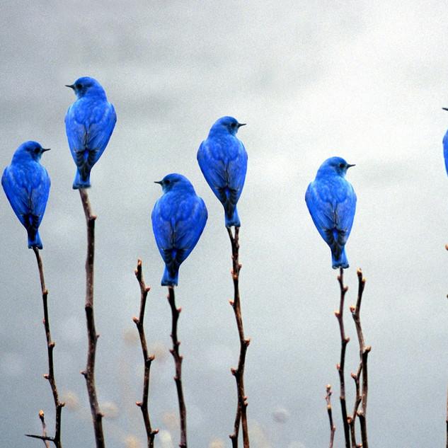 """""""Bluebird Luck"""""""