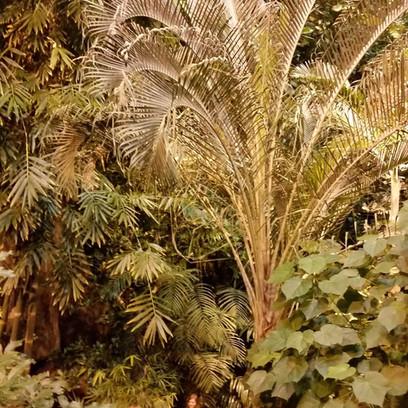 Berlin. 20th of January 2017.               Daniel Gerlach. Botanical Garden.