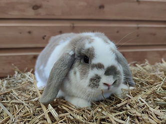 Flopsy - RESERVED
