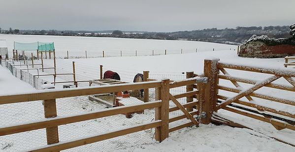 Furlock Holmes in snow.jpg