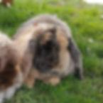 Bonnie and Benson.jpg