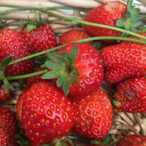 Dulwich strawberries.jpg