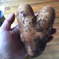 heart potato_March 2020.jpg