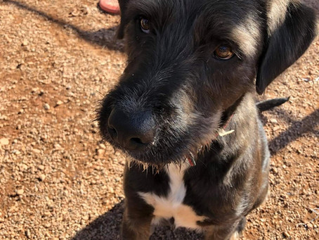 Junior - Available